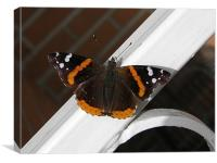 Spring Butterfly., Canvas Print