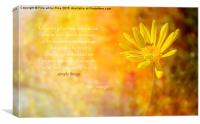 Yellow Daisy (Euryops), Canvas Print