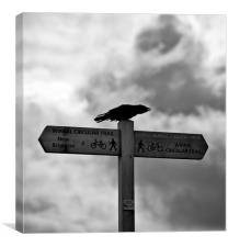 """Which Way Does The Crow Fly"", Canvas Print"