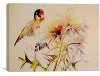 Goldfinch feeding on Thistle seeds, Canvas Print