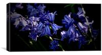 Bluebells in the sunlight                         , Canvas Print