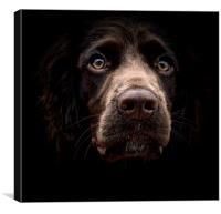 Face Of A English Cocker Spaniel Puppy            , Canvas Print