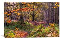 Cannock Chase in the Autumn, Canvas Print