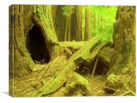 Summer in the Redwoods, Canvas Print