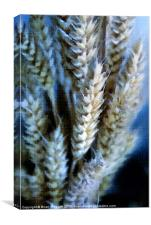 Dried Wheat Heads Bunch in Pastel, Canvas Print