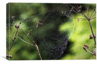 Spiders Web covered in dew, Canvas Print