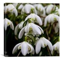 Not long till spring, Canvas Print