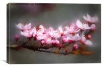 Dreamy Spring Time, Canvas Print