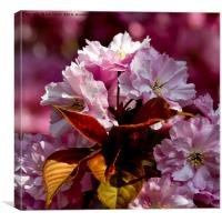 Copper Leaves and Cherry Blossom, Canvas Print