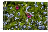 Red Campion and Forget-me-nots, Canvas Print