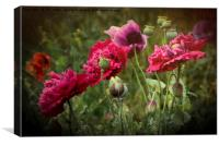 Artistic textured Poppies, Canvas Print