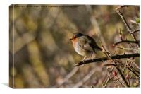 Robin perched on a rose branch, Canvas Print