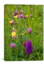 English Wild Flower Meadow, Canvas Print