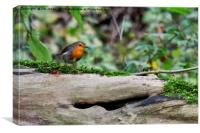 Robin perched on a fallen tree trunk, Canvas Print