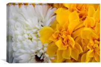 Yellow and White Chrysanthemums, Canvas Print