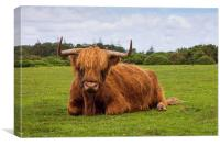 Highland cow of the New Forest, Canvas Print