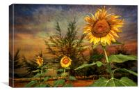 Three Sunflowers, Canvas Print
