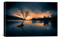 Lone Tree Snowdonia, Canvas Print