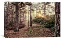 A misty sunrise in the forest, Canvas Print