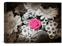 Pink rose with monochrome flowers, Canvas Print