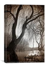 Weeping willow 1, Canvas Print