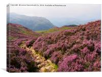 Heather on Stonethwaite Fell below High Crag and L, Canvas Print
