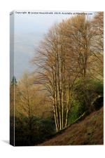 Late afternoon sun on bare trees in autumn near Gr, Canvas Print