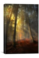 The rays of autumn, Canvas Print