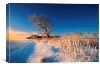 A winters morning, Canvas Print