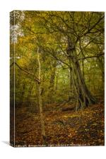 Autumn in Loxley Valley, Canvas Print
