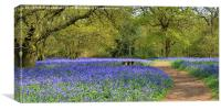 Bluebell Woodlands, Canvas Print