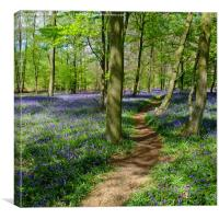 Pathway through the Bluebells, Canvas Print