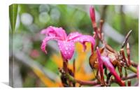 Hibiscus raindrops are falling on my head, Canvas Print