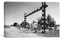 Bullock carts and unmanned crossing, Canvas Print