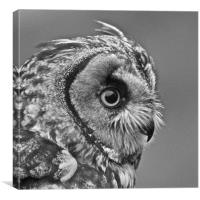 Eagle Owl Watches, Canvas Print