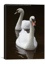 Two swans on the lake, Canvas Print