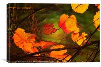 Autumn Leaves at Sunset, Canvas Print