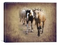 American Quarter Horse Herd, Canvas Print