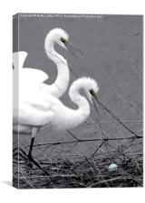 Great Egrets With Egg, Canvas Print