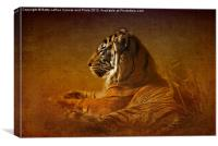 Dont Wake a Sleeping Tiger, Canvas Print