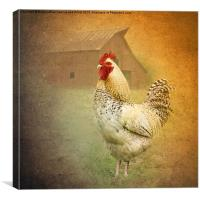 Barnyard Boss, Canvas Print