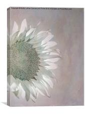 A Touch of Pale, Canvas Print