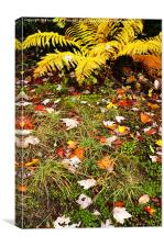 Fall Color Fern and Leaves, Canvas Print