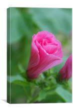Pink and Wholesome and Sweet, Canvas Print