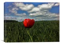 A Lonely Poppy, Canvas Print