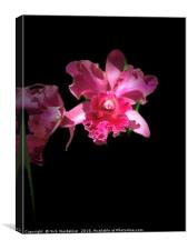 Mexican Orchid, Canvas Print