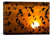 Starling, Murmuration, Sunset, Sussex, Canvas Print