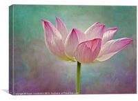 Pink Lotus Blossom, Canvas Print