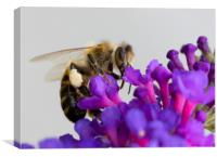 Bee &  Buddleja, Canvas Print