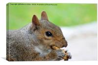 Snack time, Canvas Print